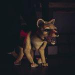 Vergeten Dieren en Verloren Zaken (6+) © Binie Visual Communication